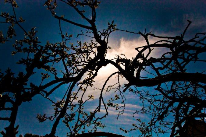 'Glastonbury Thorn'. Photography: Mike Dodson/Vagabond Images