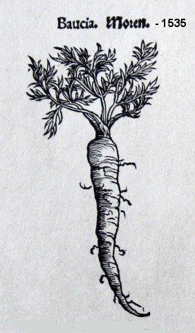 Poezija i plandovanje - Page 3 Carrot1535