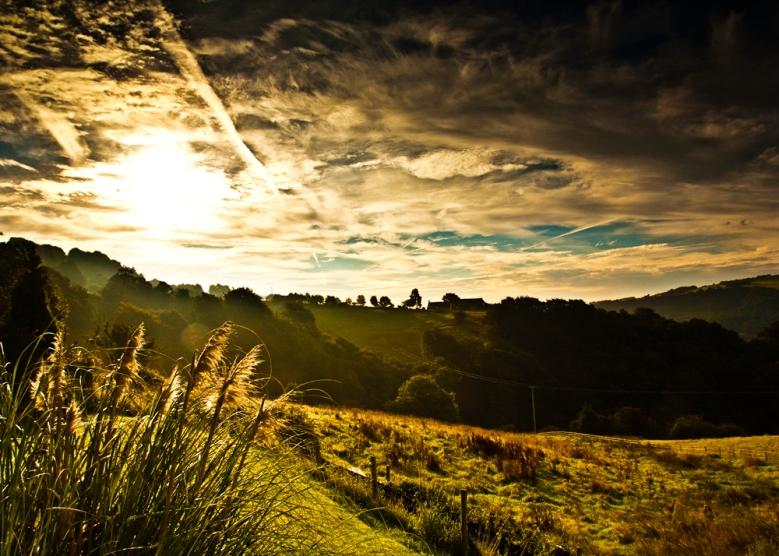 landscape mike2.jpeg