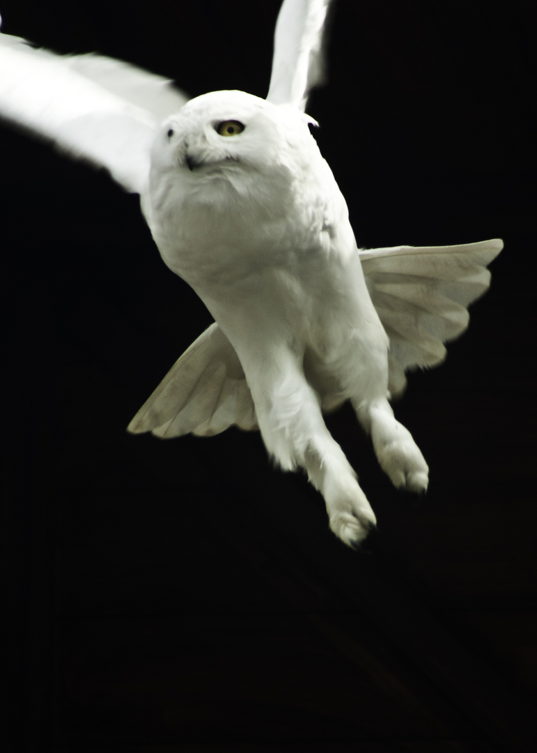 owl-mike
