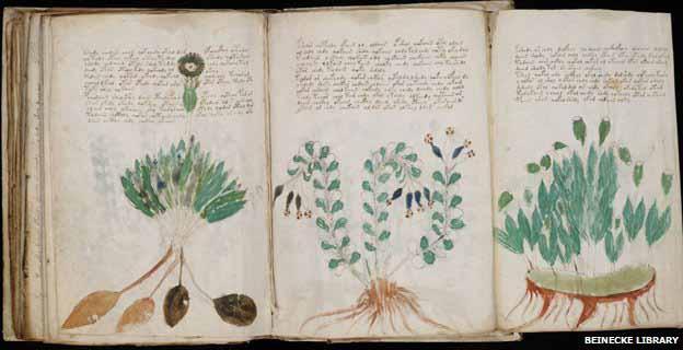 voynich_manuscript613