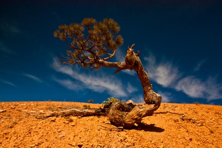 vagabond-images-desert