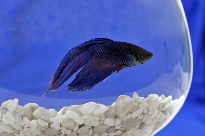 13TB-FISH-superJumbo