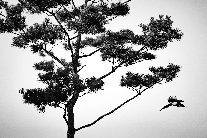 sunyu-kim-qKrrfTi_ikw-unsplash.jpg